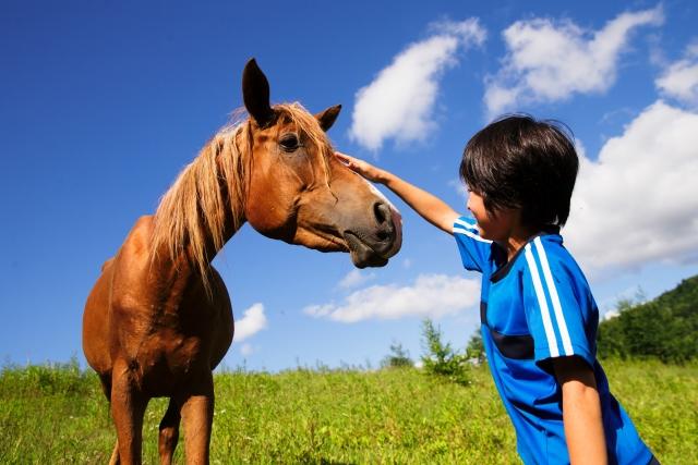 馬をなでる男の子